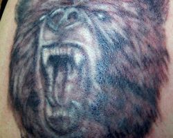 Bear Tattoo Images