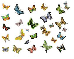 Butterfly Tattoo Meaning Designs