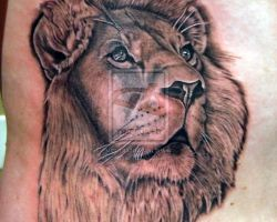 Female Lion Tattoo Pictures