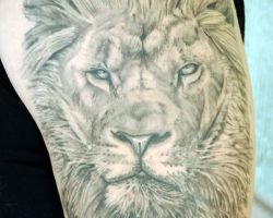 Lion Tattoo Gallery