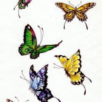 Butterfly Tattoo Colors