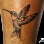 Black And Grey Hummingbird Tattoos